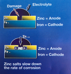 Cathodic Protection of Zinc Coatings