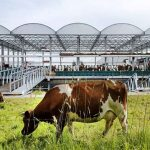 Floating Farm Rotterdam Goldsmith